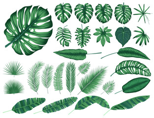 Detailed tropical leaves and plants, vector collection isolated elements