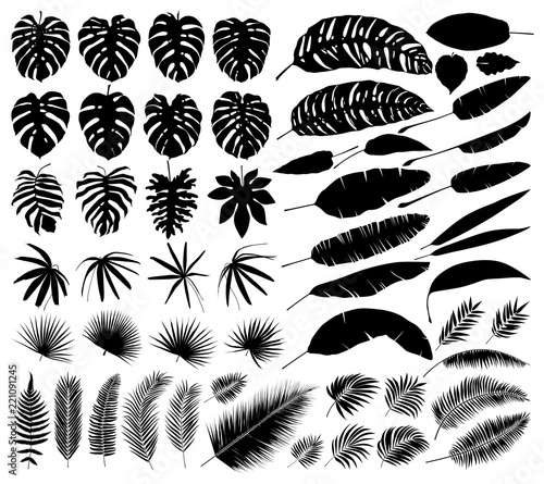 Foto  Vector set of silhouettes of tropical leaves, botanical isolated elements