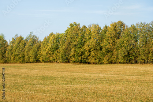 Foto op Canvas Platteland Autumn field with trees, sky with clouds. A clear and serene day.