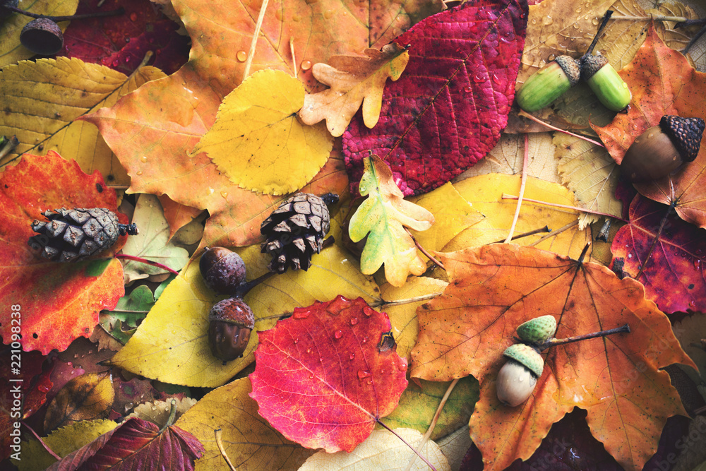Fototapety, obrazy: autumn leaves with water drops