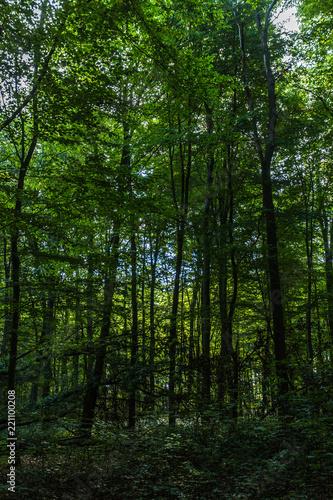 Garden Poster Forest Wald bei Rostock