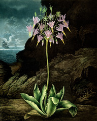 Fototapeta Egzotyczne illustration of flower