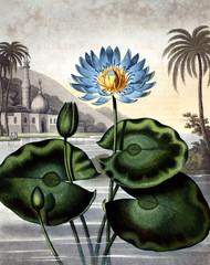 Fototapeta Rzeki i Jeziora illustration of flower