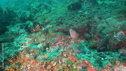 Moray eel on coral reef. Underwater world with corals and tropical fish. Diving and snorkeling in the tropical sea. Travel concept. Bali,Indonesia.