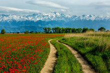 Country Road Through Fields Of Poppies