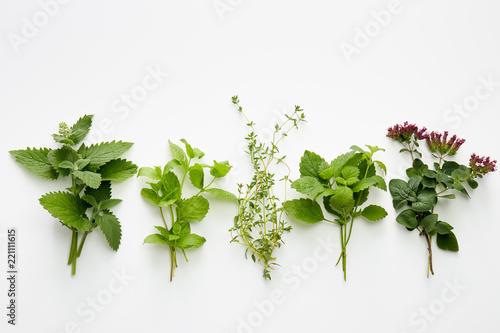 Fototapeta Assortment of fresh herbs (catnip, mint, thym, lemon balm and oregano) obraz