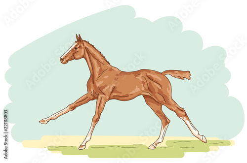 An illustration of a cantering foal on the white background. Fototapete