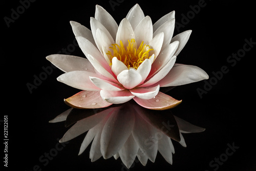 Poster de jardin Nénuphars Pink water lily