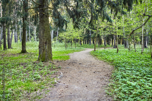 Tuinposter Weg in bos Forest path for hiking among trees. Outdoor recreation concept. Summer or spring day