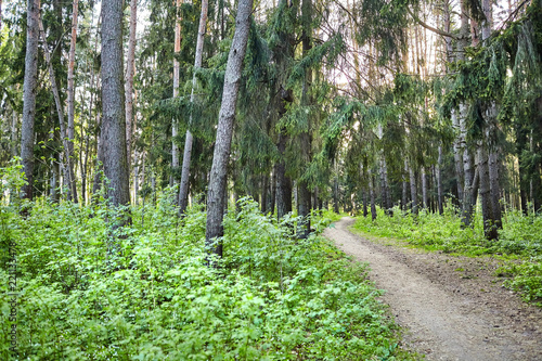 Fotobehang Weg in bos Forest path for hiking among trees. Outdoor recreation concept. Summer or spring day