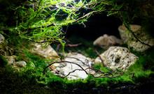 Beautiful Underwater Landscape. Aquarium Design.