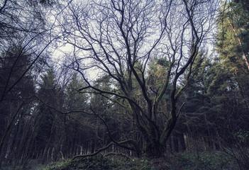 Fototapeta Woods