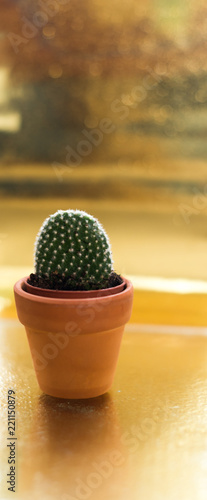 Cactus in a jamb on a golden background