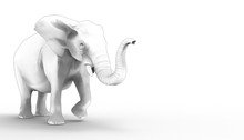 Elephant Drawing And Sketch On Isolate Background  / Illustration Art Concept