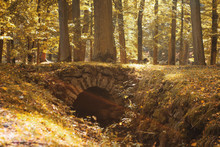 Beautiful Autumn View. A Bridge Or A Footpath In The Forest Between The Trees.
