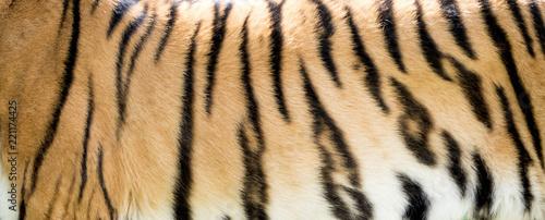 In de dag Tijger Close-up of tiger fur, nature pattern, background