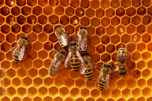 Bees on honeycomb. Wallpaper Mural