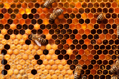 Bees on honeycomb. Tapéta, Fotótapéta