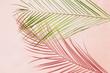 Leinwandbild Motiv Palm leaf