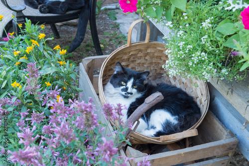 cat in a basket Wallpaper Mural