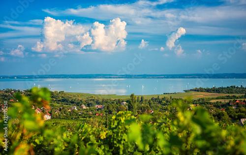 Nice vineyard in Hungary at lake Balaton Wallpaper Mural