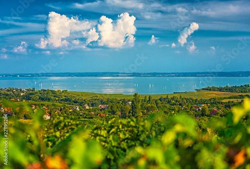 Fotografia Nice vineyard in Hungary at lake Balaton