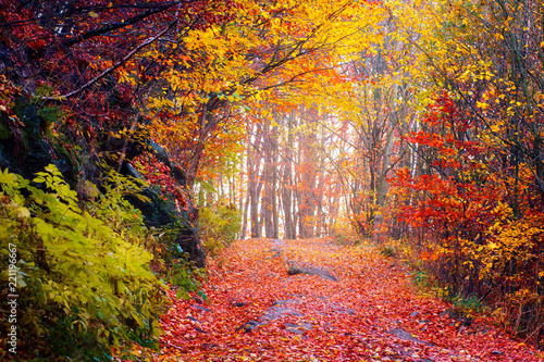 Aluminium Prints Autumn Colorful autumn forest