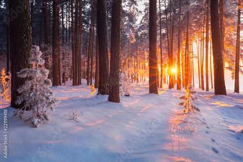 Obraz Winter forest - fototapety do salonu