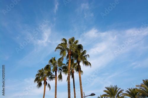 Deurstickers Palm boom Palm tree top against blue skies