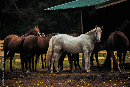 horses at the feeder