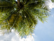 Coconut Tree Under Blue Sky In...