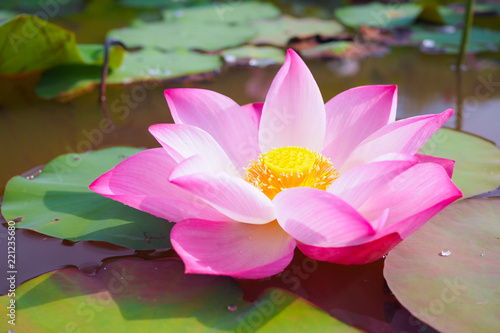 Staande foto Lotusbloem Beautiful pink lotus flower in river