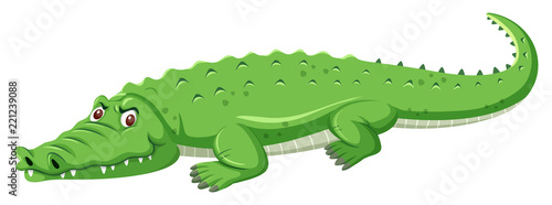 Photo A green crocodile on white background