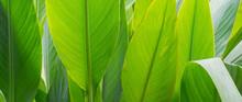 Green Leaves Natural Background Wallpaper, Leaf Texture,