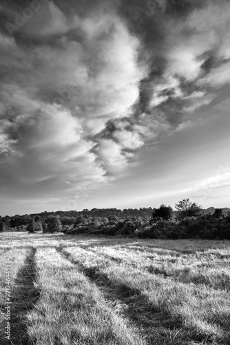Beautiful Summer sunset landscape image of Ashdown Forest in English countryside black and white image