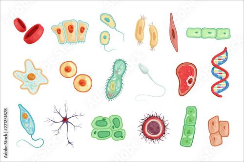 Cuadros en Lienzo Anatomy of human cells set of detailed vector Illustrations