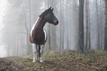 Beautiful Horse In Foggy Forest
