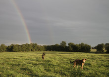 Two Dogs And A Double Rainbow