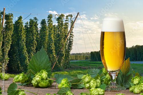 Tuinposter Bier / Cider Glass of beer with hop cones in front of hop field.