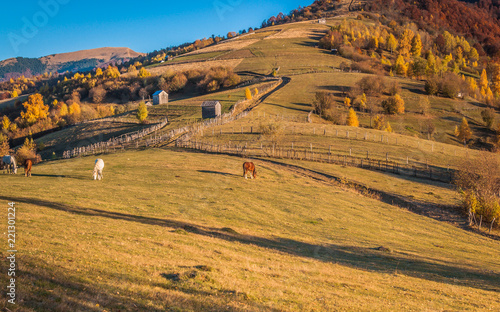 Foto op Canvas Honing Horses in the autumn mountains
