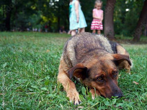 Foto  Brown dog with sad eyes lying on the grass.