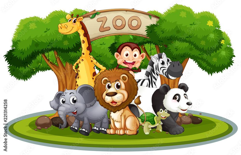 Fototapeta Cute animals in the zoo