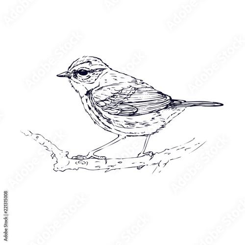 Bluebird hand drawn. Sketch Canvas-taulu