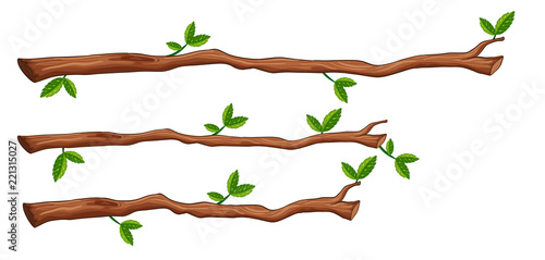 Fototapeta A set of tree branch obraz