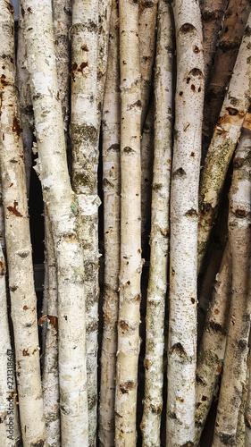 Aluminium Prints Firewood texture Many thin trunks of Silver birch (Betula pendula)