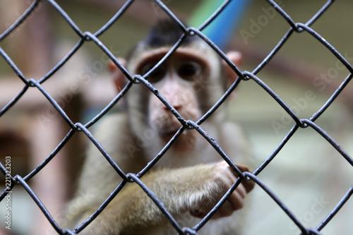 Monkey in captivity Wallpaper Mural