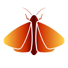 Clothing Moth Icon