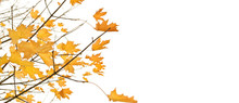 Autumn Background. Fall Maple Leaves