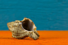 One Sea Shell Is Shown On Up C...