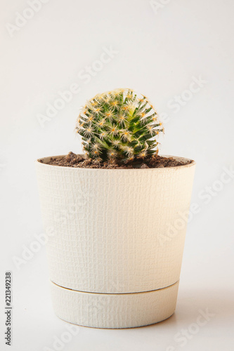 Foto op Canvas Cactus Cactus Ceramic in pot on a white space and white background.
